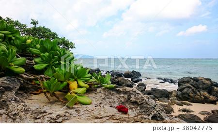 南国 ハワイ オアフ島 ビーチ 空と海 38042775