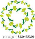 菜の花の輪 38043589