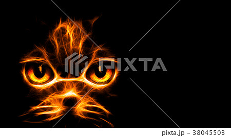 Abstract fire cat on black background 38045503