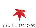 もみじ モミジ 紅葉の写真 38047495