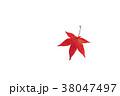 もみじ モミジ 紅葉の写真 38047497