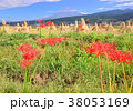 富士山 水田 稲藁の写真 38053169