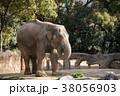 象 天王寺動物園 アジアゾウの写真 38056903