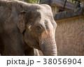 象 天王寺動物園 アジアゾウの写真 38056904