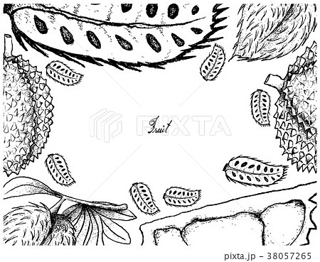 Hand Drawn Frame of Soursop and Durian Fruits 38057265