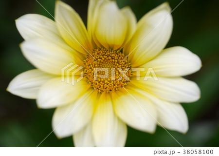 白い花 38058100