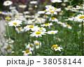 白い花 38058144