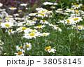 白い花 38058145