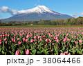 富士山 チューリップ 花畑の写真 38064466