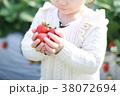 苺狩り (子供 幼児 女性 イチゴ いちご 苺 フルーツ 果物 レジャー ビニールハウス デザート) 38072694