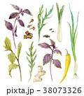 菜 菜っ葉 組み合わせのイラスト 38073326
