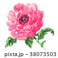 花 ラナンキュラス 水彩のイラスト 38073503