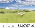 ひつじ ヒツジ 羊の写真 38076710