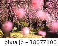 梅の花 38077100