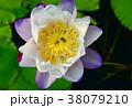 花 お花 フラワーの写真 38079210