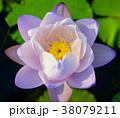 花 フラワー 葉の写真 38079211