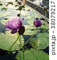 咲く 花 開花の写真 38079217