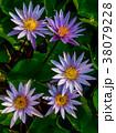 咲く 花 開花の写真 38079228