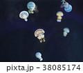 タコクラゲ 38085174