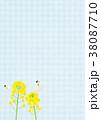 菜の花 蝶 花のイラスト 38087710