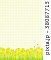 菜の花 菜の花畑 春のイラスト 38087713
