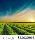 トマト 野原 運動場の写真 38088904