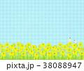 菜の花 菜の花畑 春のイラスト 38088947