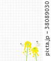 菜の花 蝶 花のイラスト 38089030