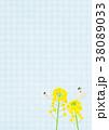 菜の花 蝶 花のイラスト 38089033