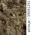 朽ちかけの木の表皮 38091291