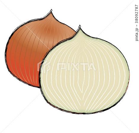 玉ねぎのイラスト 玉ねぎの断面|手描き風イラスト 墨絵|ベクターデータ 38092787