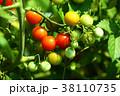 植物 野菜 実の写真 38110735