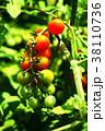 植物 野菜 実の写真 38110736