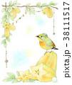 スターフルーツと相思鳥 38111517
