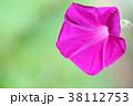 クローズアップ 花 植物の写真 38112753