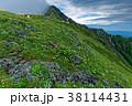 北岳 南アルプス 高山植物の写真 38114431