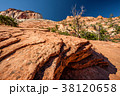 Landscape in Zion National Park 38120658