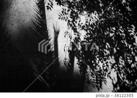 木陰 木の影 植物の影 アート アートな写真 木漏れ日 モノクロ モノクロ写真 白黒写真 38122305