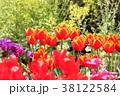 チューリップ 花 鬱金香の写真 38122584