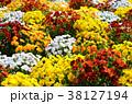 花 ビオラ 花壇の写真 38127194
