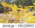 赤とんぼ とんぼ 秋の写真 38128803