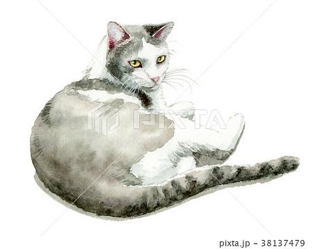 水彩で描いた白とグレーの猫 38137479