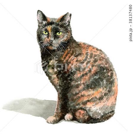 水彩で描いたサビ柄の猫 38137480