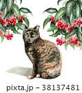 猫 水彩 サビ柄のイラスト 38137481