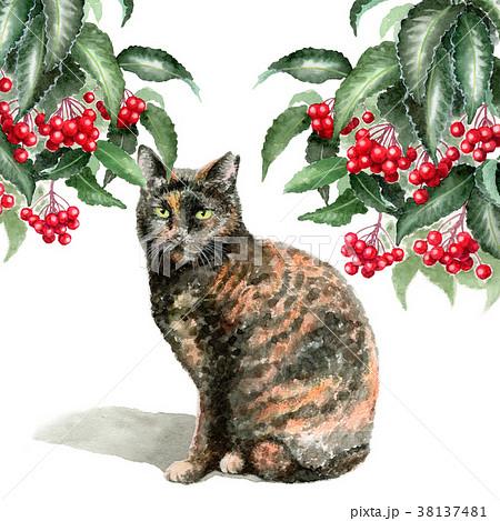 水彩で描いたマンリョウとサビ柄の猫 38137481