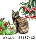 猫 水彩 サビ柄のイラスト 38137482