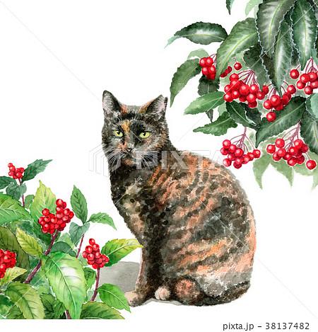 水彩で描いたセンリョウマンリョウとサビ柄の猫 38137482
