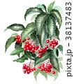 水彩 万両 植物のイラスト 38137483