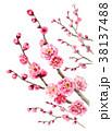 ピンク 花 春のイラスト 38137488