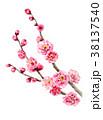 ピンク 花 春のイラスト 38137540